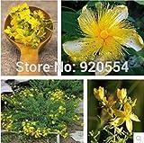 ANVIN Germinazione dei Semi: importati Seed, 10Pcs / Bag di San Giovanni Mosto  Semi di Fiori Bonsai Seeds Giardino Domestico di DIY