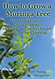 How to grow a Moringa Tree: The Ultimate Study Guide to assist, establish, and perfect the art to cultivating a blessing.