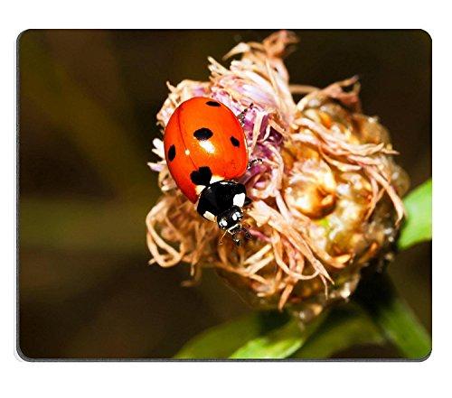 (luxlady Naturkautschuk Gaming Mousepads Makro Foto von Marienkäfer Bug auf Blume Bild-ID 25597006)