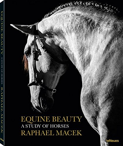 Equine Beauty: A Study of Horses - Small Edition