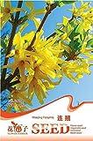20 semi / pacchetto Piangendo forsizia Semi giardino pentole e fioriere