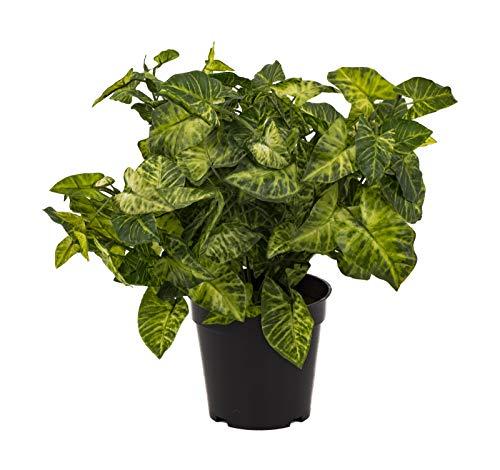 artfleur - künstlicher Syngonium Purpurtute ca. 40 cm Grünpflanze Kunstpflanze