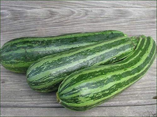 honic semi pacchetto: squash, cocelle zucchini squash heirloom (open impollinazione) - 30 semi