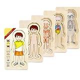 Amawong Holzpuzzle Menschen Körper Spielzeug 5 Schichten Puzzlespiel Jungen Mädchen Struktur für Kinder Pädagogische Lernen, ab 3 Jahre