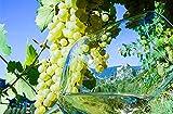 Jochen Schweizer Geschenkgutschein: Weinkenner-Kurzurlaub in Südtirol für 2