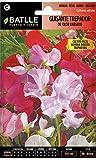 Semillas de Flores - Guisante Trepador de Olor variado - Batlle