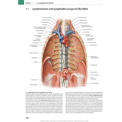 PDF] PROMETHEUS Lernatlas der Anatomie. Hals und Innere Organe ...