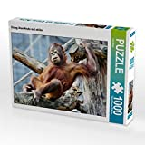 CALVENDO Puzzle Orang Utan-Heute mal chillen 1000 Teile Lege-Größe 64 x 48 cm Foto-Puzzle Bild von Arno Klatt