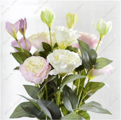 200 Pcs intérieur Bonsai Eustoma Graines vivaces plantes à fleurs Balcon Fleurs Graines Lisianthus en pot pour Planters Flower Pot 20