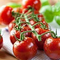 Semillas rojas Tall Tall Cherry Tomato Pokusa - Lycopersicon lycopersicum