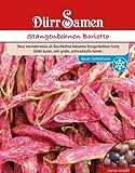 Bohnen - StangenBohnen - Borlotto von Dürr-Samen