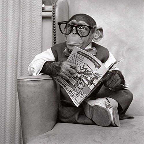 Camden Grafiken 375730-0-22,9cm Funny Fotografien Monkey Vater 's Day Karte