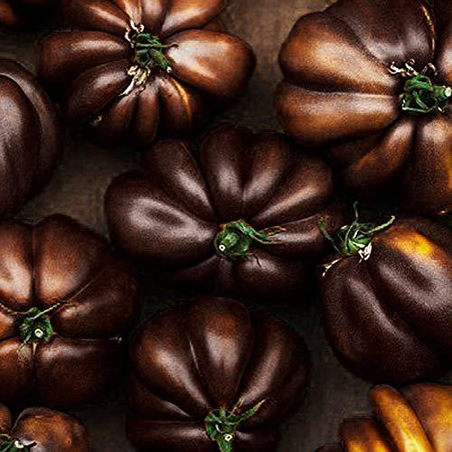 Bloom Green Co. 500pcs Bonsai Schwarze Tomate SEHR SELTEN nährende Niere und Bleaching Haut Heide Gemüse Gartenbonsai