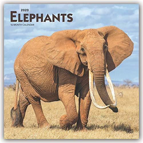Elephants - Elefanten 2020 - 18-Monatskalender: Original BrownTrout-Kalender [Mehrsprachig] [Kalender]