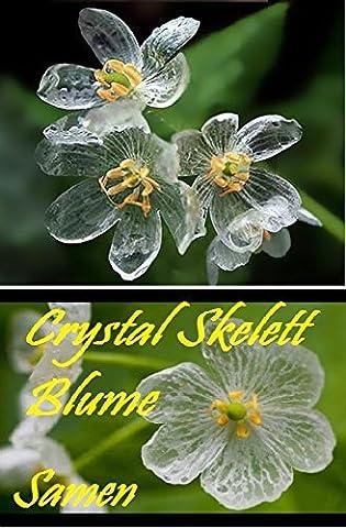 25x Crystal Skelett Blume Samen Blumensamen Garten selten Saatgut Pflanze Garten Rarität Frisch Neuheit #39