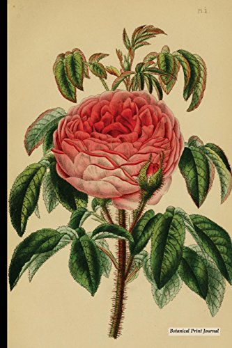 Vintage Moss Rose (Botanical Print Journal: Perpetual Moss Rose, 6