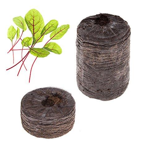 Tregren Kit de graines Oseille rouge pour Potager d'intérieur autonome - Kit de 2 capsules prêt à pousser avec graines d'Oseille rouge . Récoltez vos salades à la maison en quelques semaines et sans effort !