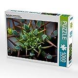 Euphorbia avasmontana 1000 Teile Puzzle Quer