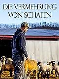 die Vermehrung von Schafen