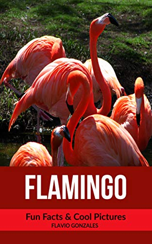 Flamingo: Fun Facts & Cool Pictures (English Edition) - Cool Flamingos