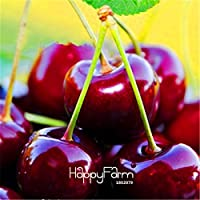 Nueva ArrivalDirect estadounidenses Cerezas de semillas de semillas de árboles de cerezo cerezo enano de semillas de árboles frutales Semillas del Sur da Fruta, 5 PC / paquete, # FJ33YY