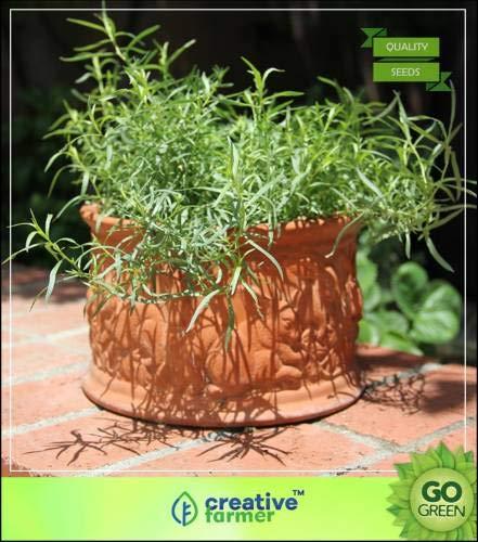 Pinkdose Kräutersamen Garten - Französisch Estragon Aromatische Kräuter Seed