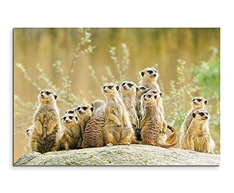 Wandbild 120x80cm Tierfotografie – Gruppe von Erdmännchen