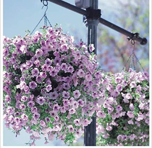 Go Garden 7: 100 Petunia Seeds Rare Variété, Hardy, Lasting Balcon, Jardin Fleur