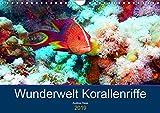 Wunderwelt Korallenriffe (Wandkalender 2019 DIN A4 quer): Farbenpracht und Artenvielfalt unter Wasser (Monatskalender, 14 Seiten ) (CALVENDO Hobbys)