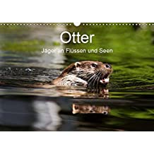 Otter - Jäger an Flüssen und Seen (Wandkalender 2019 DIN A3 quer): Otter - geschickte Jäger im Wasser (Monatskalender, 14 Seiten ) (CALVENDO Tiere)