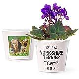 Yorkshire Terrier Geschenk Blumentopf (ø16cm) | Für Hundebesitzerin mit Rahmen für zwei Fotos (10x15cm) | Stolze Yorkshire Terrier Mama