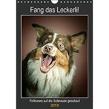 Fang das Leckerli (Wandkalender 2019 DIN A4 hoch): Fellnasen auf die Schnauze geschaut (Planer, 14 Seiten ) (CALVENDO Tiere)