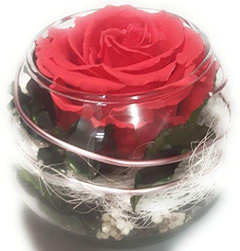Rosen-te-amo Konservierte-Rosen-Blumen-Gesteck aus ECHTE Blumen in der Vase, 1 PREMIUM haltbare-Rose – unser EXKLUSIVES Blumen-Arrangement sind lange haltbar, handgemacht und mit Liebe gefertigt(Pink)