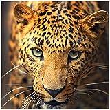 Wallario Glasbild Leopard in Nahaufnahme Bein Laufen - 50 x 50 cm in Premium-Qualität: Brillante Farben, freischwebende Optik