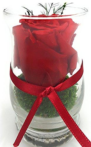 Rosen-te-amo Blumenstrauß aus ECHTE Haltbare Rosen in der Vase (Rosen-Gesteck) 3 JAHRE haltbar OHNE WASSER Blumenarrangement für die Hochzeitsdeko, Party Deko & Wohnzimmer - Gesteck aus PREMIUM Konservierte Rosen lange haltbar ist handgemacht und mit Liebe gefertigt (Oval-Zylindrisch H: 9cm B: 7,5 cm, Rot)