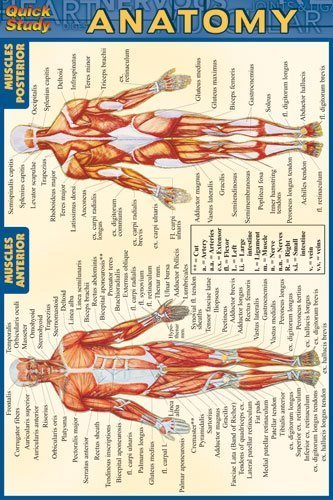 Anatomy (Quickstudy) 1 Lam Crds edition by BarCharts, Inc. (2003) Pamphlet