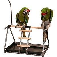 Northern Parrots Perchoir de table avec porte-jouets et mangeoires pour perroquet