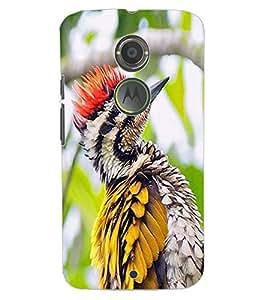 ColourCraft Lovely Bird Design Back Case Cover for MOTOROLA MOTO X2