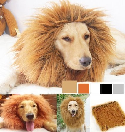 - Fancy Dress Hunde