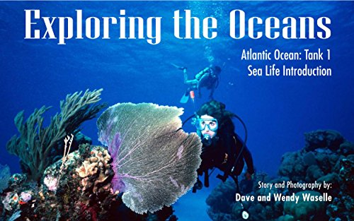 Exploring the Oceans, Atlantic Ocean: Tank 1: Sea Life Introduction (English Edition) -