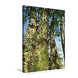 Premium Textil-Leinwand 50 cm x 75 cm hoch, Ein Motiv aus dem Kalender Bilder aus dem Chaco in Paraguay | Wandbild, Bild auf Keilrahmen, Fertigbild Junge Flaschenbäume (CALVENDO Natur)