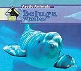 Beluga Whales (Arctic Animals)