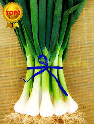 Original paquet de 100 graines / Paquet Four Seasons Onion Seed Seasons Echalote Graines Ciboulette Plantes Légumes Balcon Santé Mini Bonsai