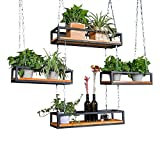 FuweiEncore ZRX-Flower Rack Retro Soporte de Flor Tipo Techo Estante de Pared en...