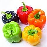 WENYFX Mix Color Sweet Pimento Pepper Seeds Non OGM Organic Commestibili Semi di ortaggi per giardino domestico Bonsai da esterno