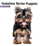 Yorkshire Terrier Puppies Mini 2015 Wall Calendar by Magnet & Steel