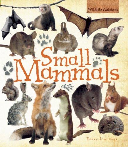 Small Mammals (QEB Wildlife Watchers)