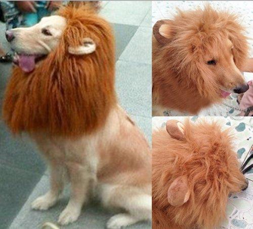 White Kostüm Lion Dog - Generic Pet Dog Costume Lion Wig with Ears (L)
