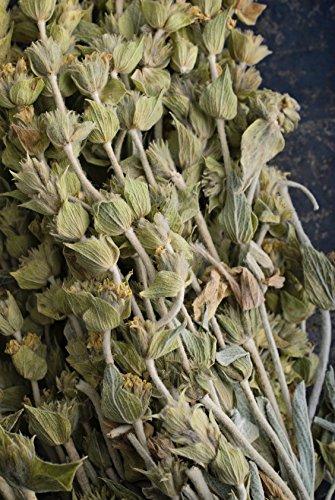 Griechischer Bergtee Sideritis syriaca 10 Samen