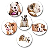 Englische Bulldogge Porträt - 6 große Kühlschrankmagnete Ø 5 cm [ 03 ] für Memoboard Pinnwand Magnettafel Whiteboard